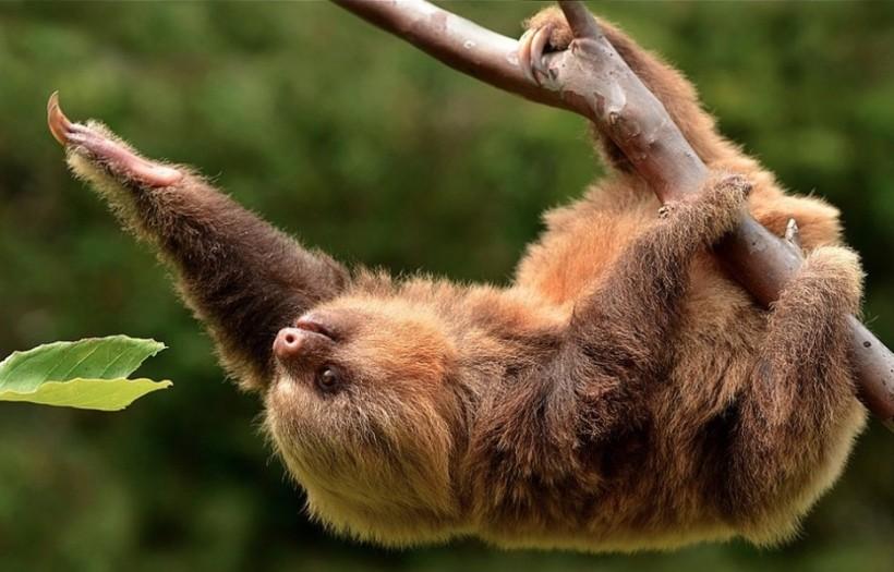 cute-sloth-22.jpg