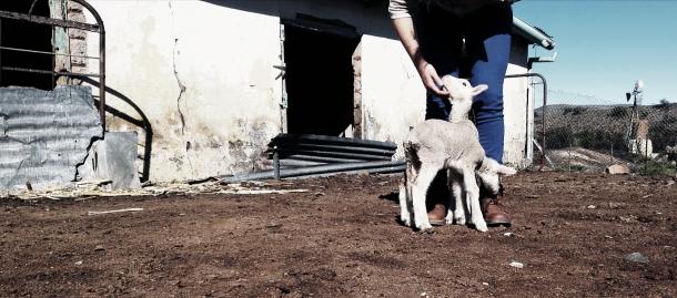 knoffelfontein (3)